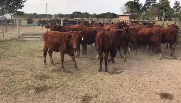 proveedores amanecer rural