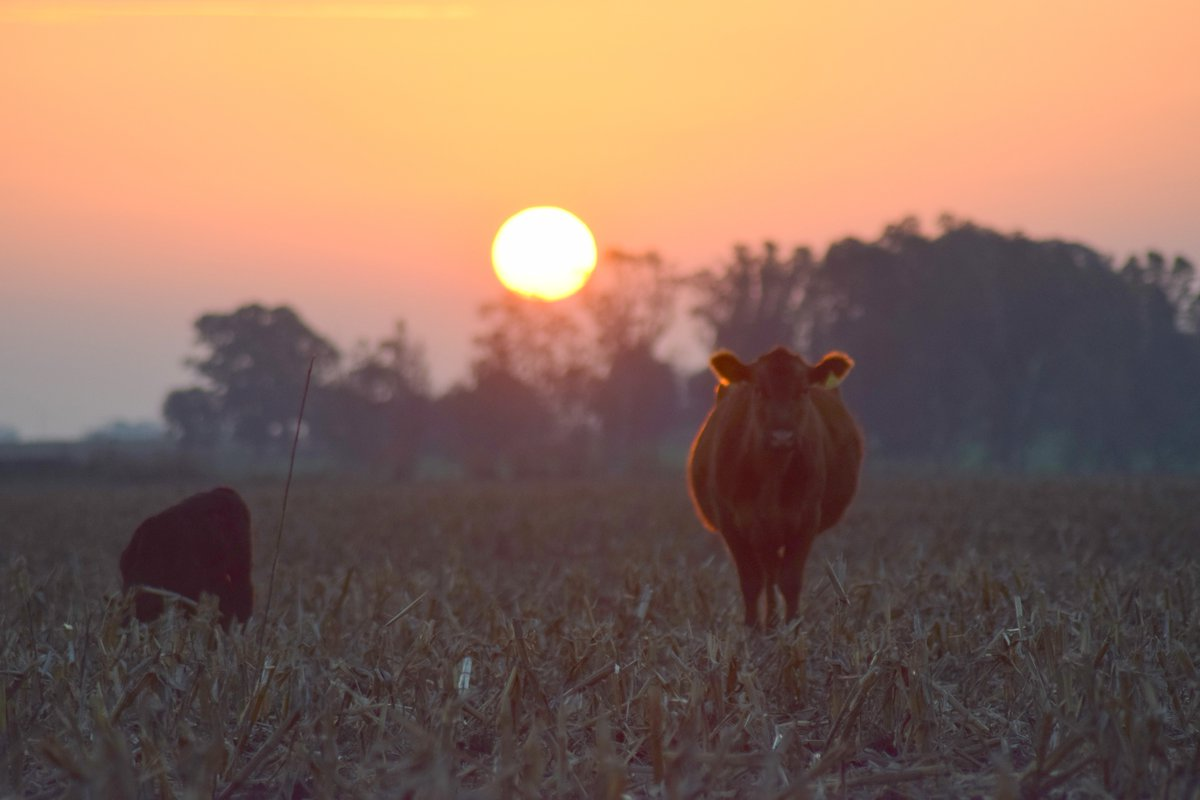 amanecer rural