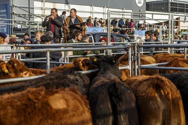 Resultado de imagen para semana de la carne exposicion rural